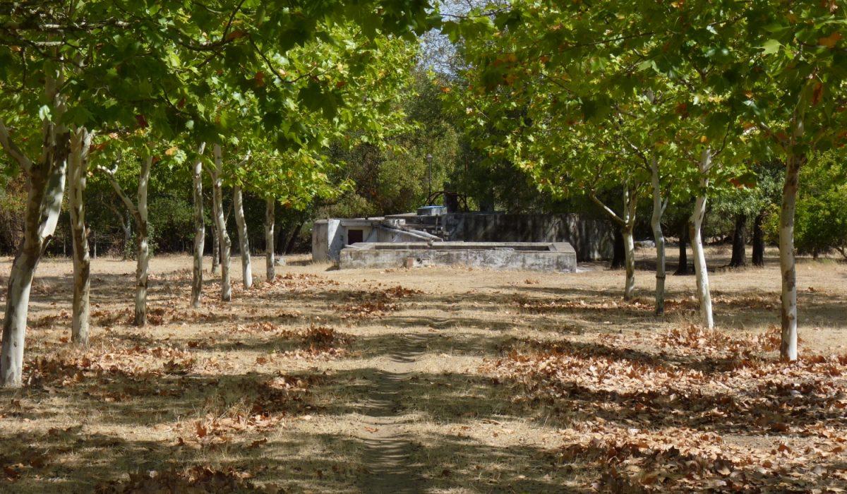 O Jardim 8